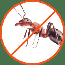 Απεντόμωση Μυρμηγκιών