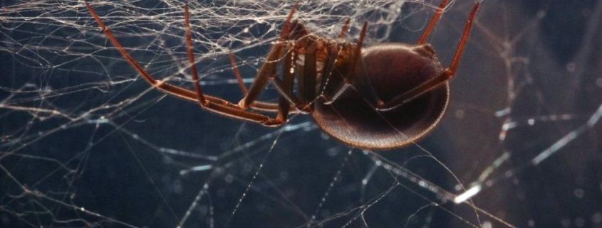 Απεντόμωση αράχνες