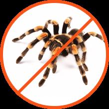 Απεντόμωση για αράχνες