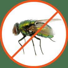 Απολύμανση για Μύγες