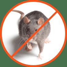 Καταπολέμηση Ποντικών