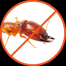 Καταπολέμηση ξυλοφάγων εντόμων